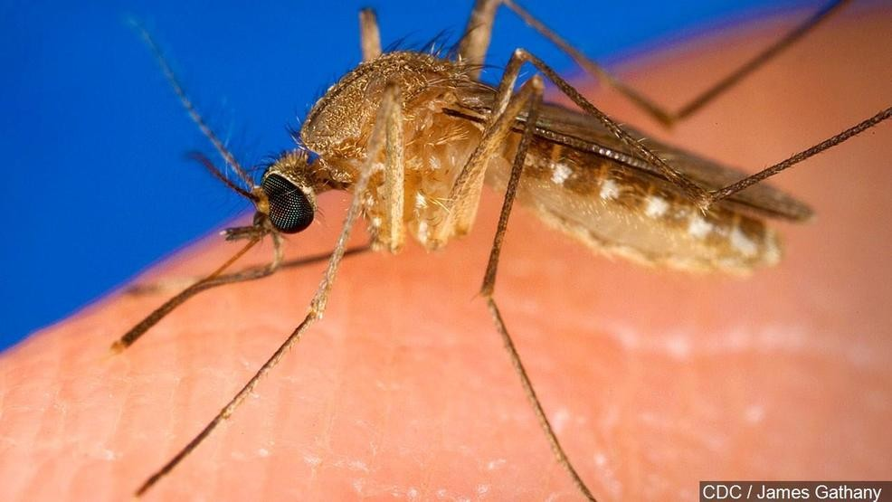 CDC reports 100+ cases of West Nile disease this year