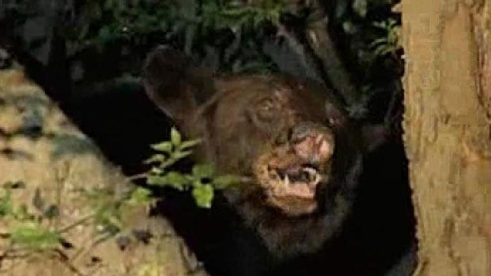 Black bear sightings reported in Van Buren County | WSBT
