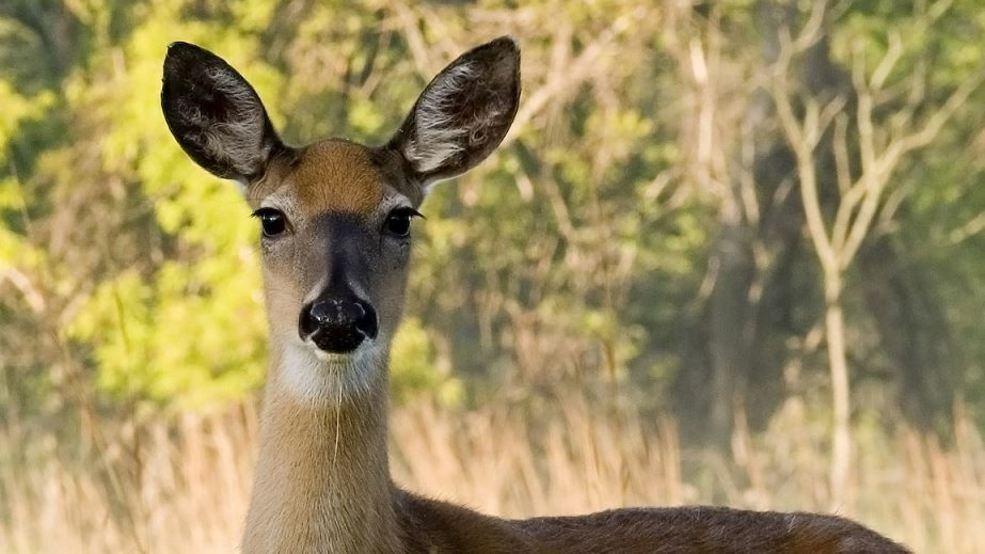 DEC makes multiple arrests in Steuben over deer poaching