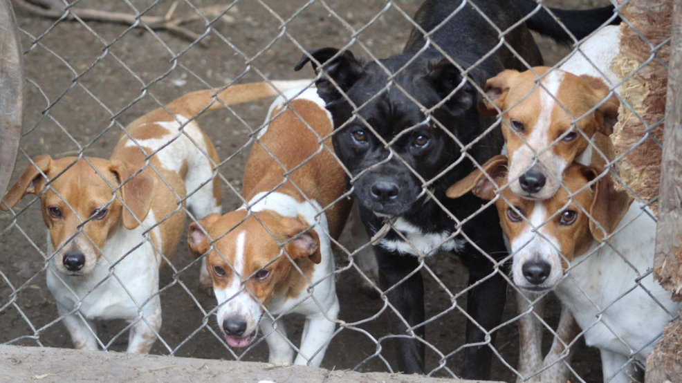 Indiana couple faces animal cruelty charges for hoarding 3